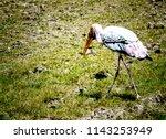 animals wildlife photography  | Shutterstock . vector #1143253949