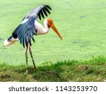 animals wildlife photography  | Shutterstock . vector #1143253970