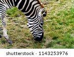 animals wildlife photography  | Shutterstock . vector #1143253976