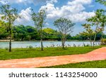 animals wildlife photography  | Shutterstock . vector #1143254000