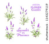 set of lavender flowers... | Shutterstock .eps vector #1143279119