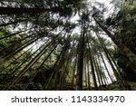 looking up towards amazing... | Shutterstock . vector #1143334970