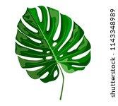 vector tropical leaf monstera ...   Shutterstock .eps vector #1143348989
