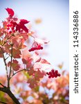red viburnum berries in autumn... | Shutterstock . vector #114336886