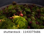succulent plants in a bowl.... | Shutterstock . vector #1143375686