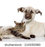 Stock photo the dog and cat embrace isolated on white background 114350380