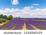 the flowering of lavender in...   Shutterstock . vector #1143560159