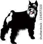 miniature schnauzer isolated on ... | Shutterstock .eps vector #114357223