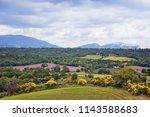 lavender fields in provence....   Shutterstock . vector #1143588683