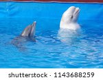 dolphins play in the pool on... | Shutterstock . vector #1143688259
