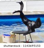 navy seal ianimal involved in... | Shutterstock . vector #1143695153