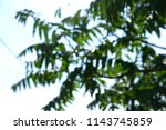 unfocused green fern palm... | Shutterstock . vector #1143745859