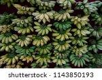 cluster of bananas type of...   Shutterstock . vector #1143850193