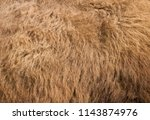 fur texture old bison hair ... | Shutterstock . vector #1143874976