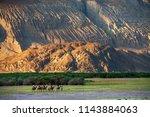 camel riding at hundar village... | Shutterstock . vector #1143884063