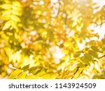 autumn leaves nature background | Shutterstock . vector #1143924509