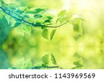 nature background with green... | Shutterstock . vector #1143969569