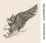 hand drawn sketch of bald eagle ... | Shutterstock .eps vector #1143989786