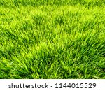 green grass background | Shutterstock . vector #1144015529
