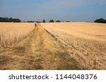 distant figure walking in a dry ... | Shutterstock . vector #1144048376