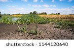 a small pond drying up during... | Shutterstock . vector #1144120640
