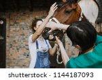 woman veterinary checking horse ...   Shutterstock . vector #1144187093