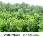 dense deciduous mountain forest ... | Shutterstock . vector #1144232363
