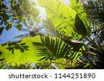 tropical lush green foliage | Shutterstock . vector #1144251890