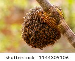 Honeycomb And Bee Or Apis...