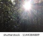vegetation on the trail to... | Shutterstock . vector #1144384889