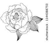 peony flower in a style... | Shutterstock . vector #1144388753