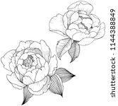 peony flower in a style... | Shutterstock . vector #1144388849