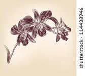 floral orchid vintage drawing...   Shutterstock .eps vector #114438946