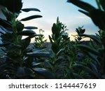 nature hd wallpapers | Shutterstock . vector #1144447619