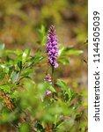 dactylorhiza fuchsii  the... | Shutterstock . vector #1144505039