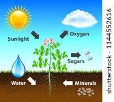photosynthesis diagram vector...   Shutterstock .eps vector #1144552616
