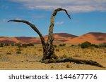 high sanddunes and a dead tree... | Shutterstock . vector #1144677776