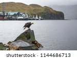 eagle and boats by the sea in... | Shutterstock . vector #1144686713