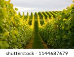 summer scenery with wineyard... | Shutterstock . vector #1144687679