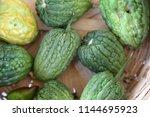 bitter melon. home grown bitter ... | Shutterstock . vector #1144695923