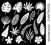 set of hand drawn tropical... | Shutterstock .eps vector #1144759223