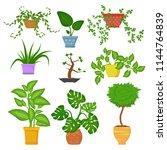 decorative houseplants in pots... | Shutterstock .eps vector #1144764839