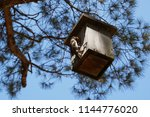 wooden birdhouse on tree | Shutterstock . vector #1144776020