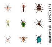 set of bug realistic symbols... | Shutterstock .eps vector #1144776173
