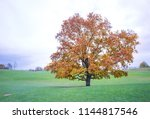 yellow autumn tree in park | Shutterstock . vector #1144817546