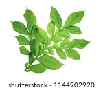 green leaf isolated on white... | Shutterstock . vector #1144902920