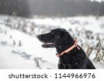 labrador retriever dog sitting... | Shutterstock . vector #1144966976