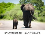Stock photo baby elephant and it s mama walking in sync 114498196