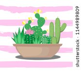 succulent and cactus in a pot ... | Shutterstock .eps vector #1144989809