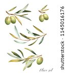 set of green  olive branches.... | Shutterstock . vector #1145016176
